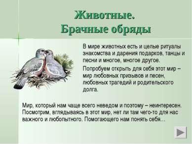 Животные. Брачные обряды В мире животных есть и целые ритуалы знакомства и да...