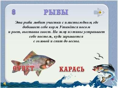 Эта рыба любит участки с илистым дном, где добывает себе корм. Уткнётся носом...