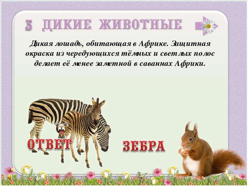 Дикая лошадь, обитающая в Африке. Защитная окраска из чередующихся тёмных и с...