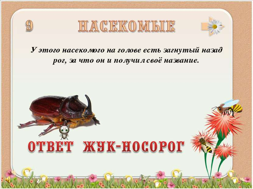 У этого насекомого на голове есть загнутый назад рог, за что он и получил сво...