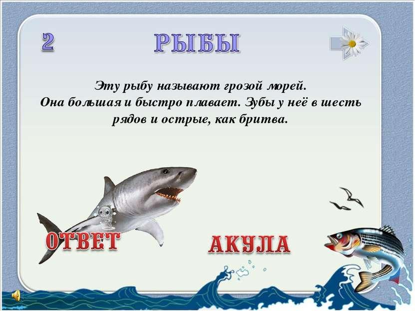 Эту рыбу называют грозой морей. Она большая ибыстро плавает. Зубы унеё вше...