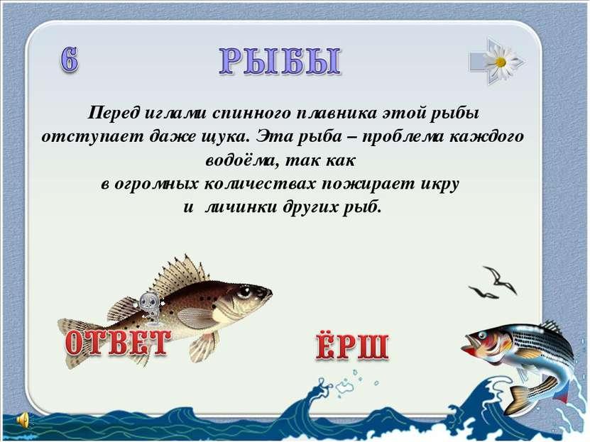 Перед иглами спинного плавника этой рыбы отступает даже щука. Эта рыба – проб...