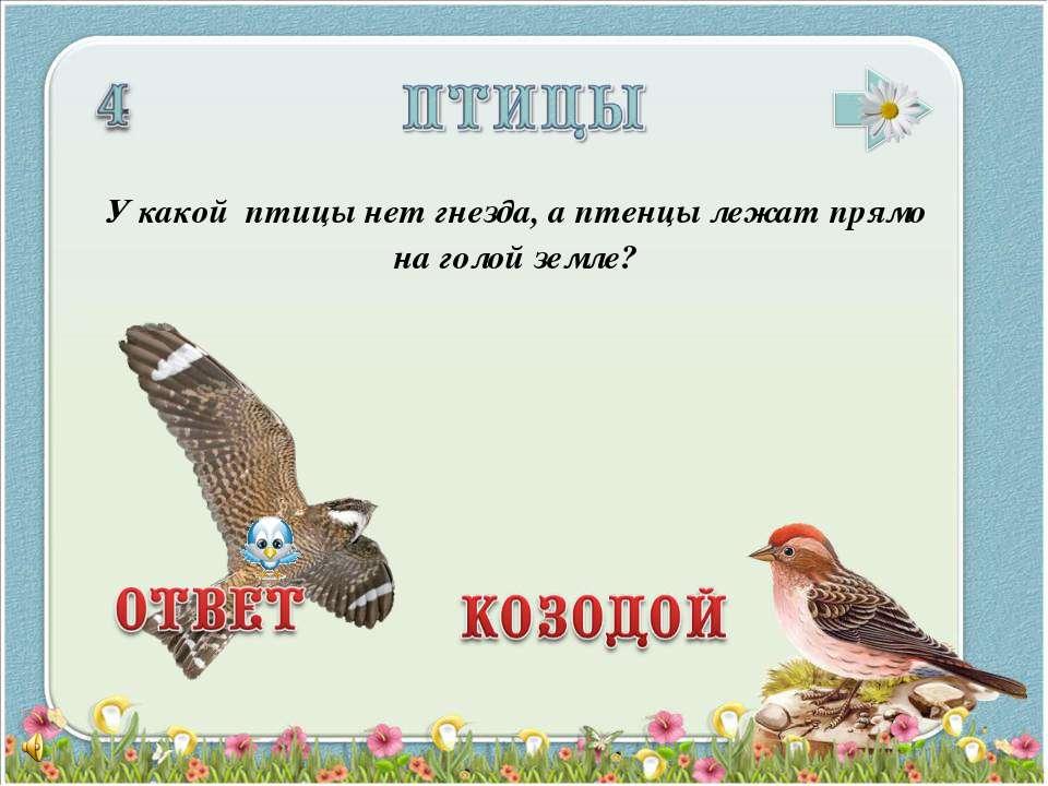 У какой птицы нет гнезда, а птенцы лежат прямо на голой земле?
