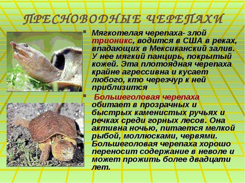 ПРЕСНОВОДНЫЕ ЧЕРЕПАХИ Мягкотелая черепаха- злой трионикс, водится в США в рек...