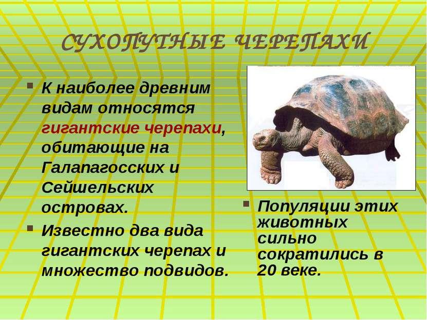 СУХОПУТНЫЕ ЧЕРЕПАХИ К наиболее древним видам относятся гигантские черепахи, о...