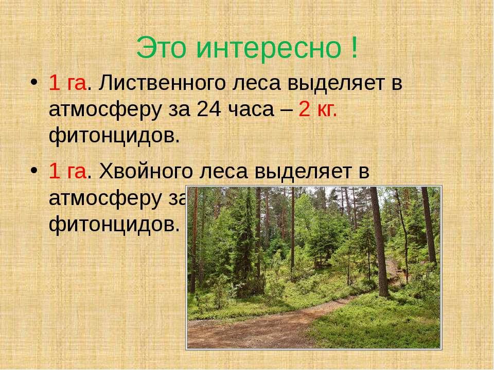 Это интересно ! 1 га. Лиственного леса выделяет в атмосферу за 24 часа – 2 кг...