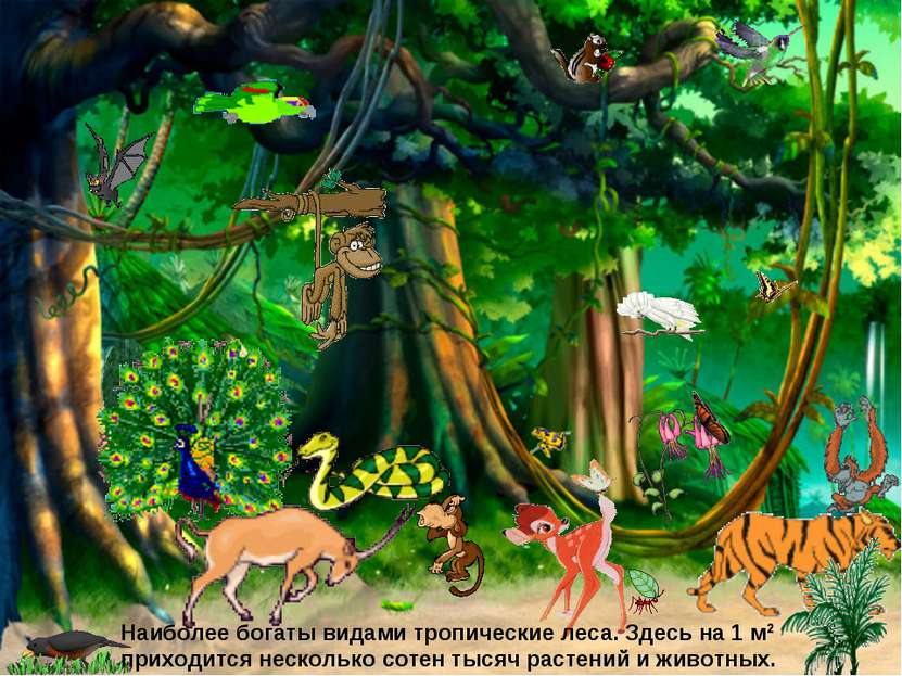 Наиболее богаты видами тропические леса. Здесь на 1 м2 приходится несколько с...
