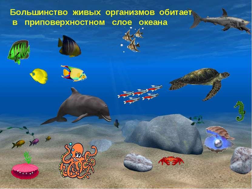 Большинство живых организмов обитает в приповерхностном слое океана