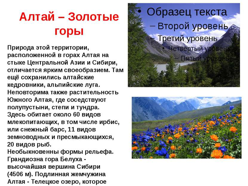 Алтай – Золотые горы Природа этой территории, расположенной в горах Алтая на ...