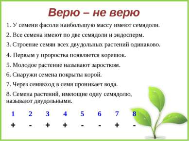 Верю – не верю 1. У семени фасоли наибольшую массу имеют семядоли. 2. Все сем...