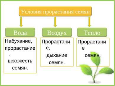 Набухание, прорастание, всхожесть семян. Прорастание семян. Прорастание, дыха...