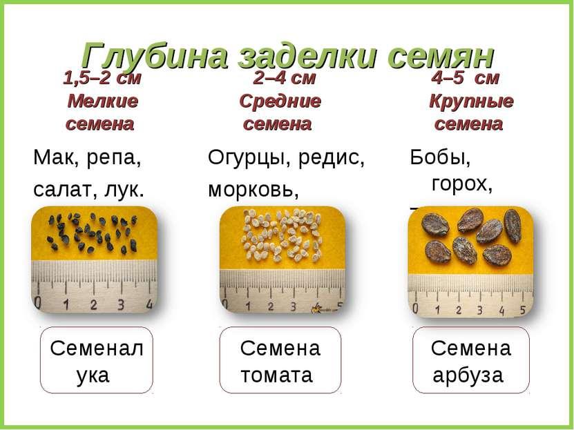 Глубина заделки семян 1,5–2 см Мелкие семена Мак, репа, салат, лук. 2–4 см Ср...