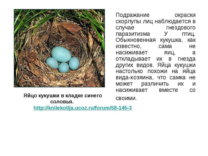 Подражание окраски скорлупы лиц наблюдается в случае гнездового паразитизма У...
