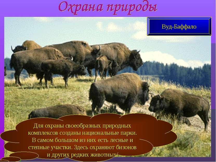 Для охраны своеобразных природных комплексов созданы национальные парки. В са...