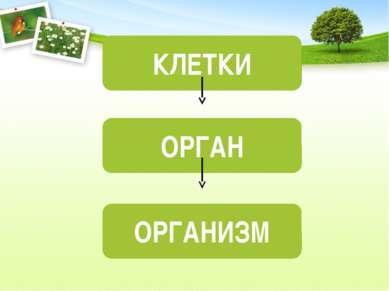 КЛЕТКИ ОРГАН ОРГАНИЗМ