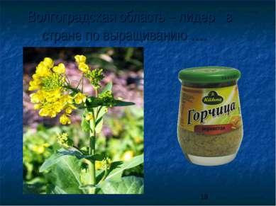 Волгоградская область – лидер в стране по выращиванию ….