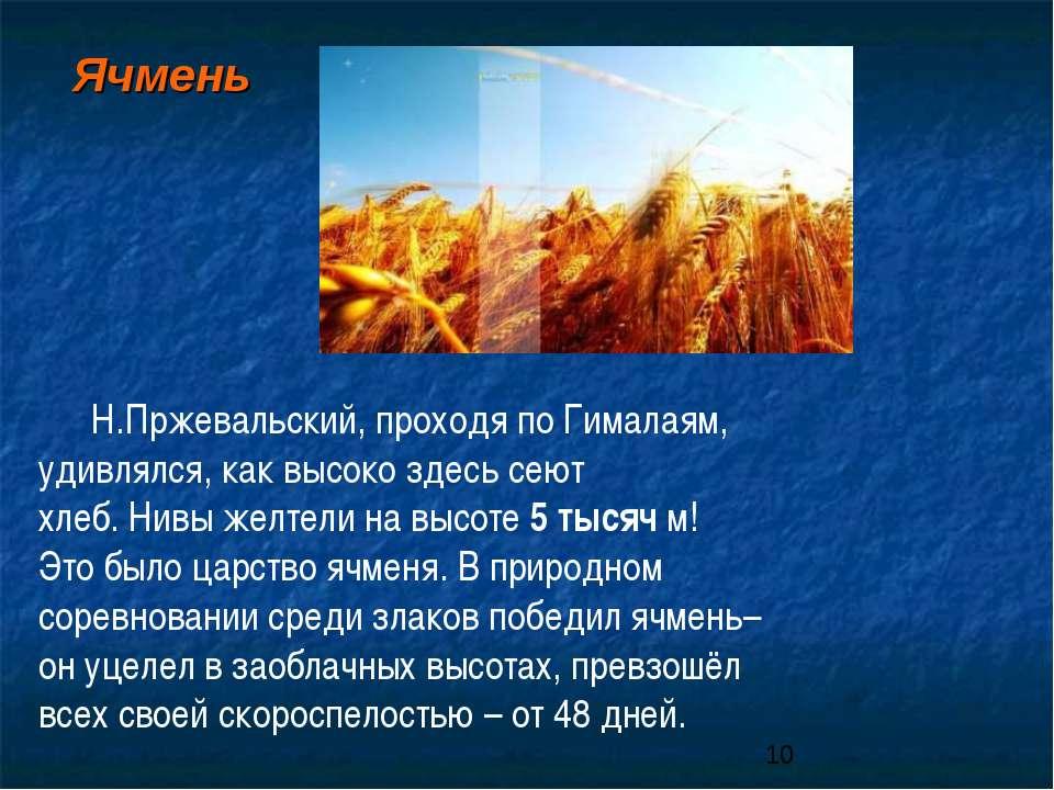 Н.Пржевальский, проходя по Гималаям, удивлялся, как высоко здесь сеют хлеб. Н...