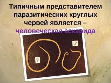 Типичным представителем паразитических круглых червей является – человеческая...