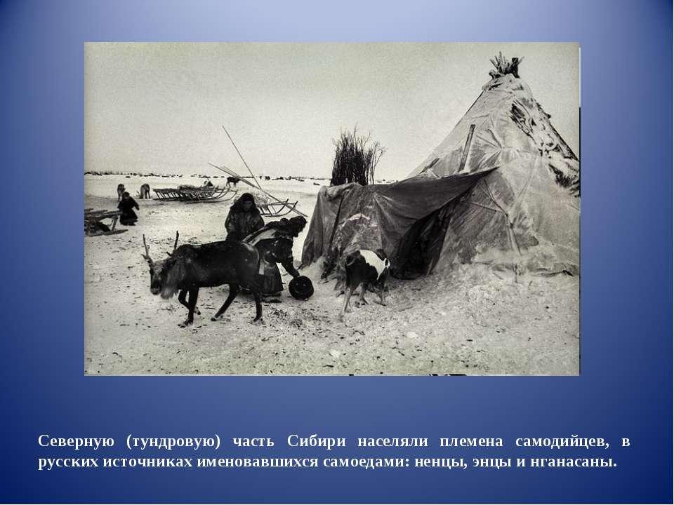 Северную (тундровую) часть Сибири населяли племена самодийцев, в русских исто...