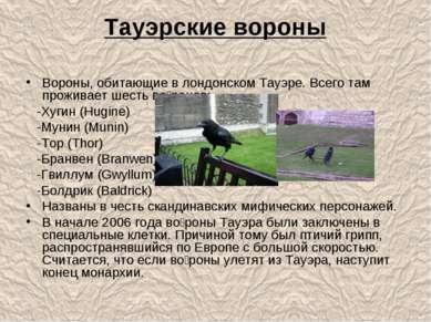 Тауэрские вороны Вороны, обитающие в лондонском Тауэре. Всего там проживает ш...