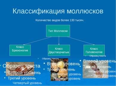 Классификация моллюсков Количество видов более 130 тысяч. Тип Моллюски Класс ...