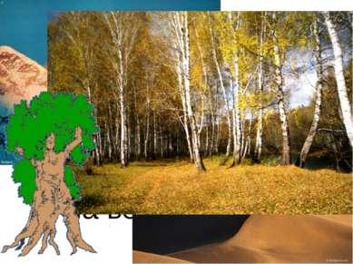 Мы встречаем деревья повсюду. Нет их только в пустынях и на вершинах гор.
