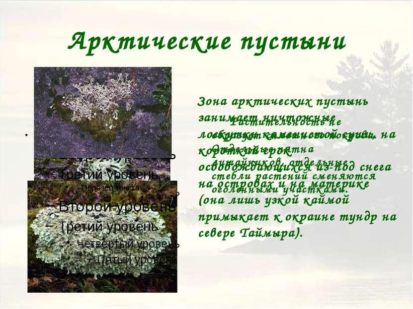 Тундра Растения тундры приспособились к короткому лету, близости мерзлоты и з...