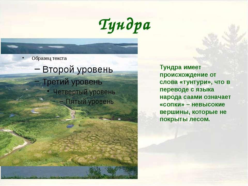 Тайга В области распространения тайги климат теплее, чем в тундре. В европейс...