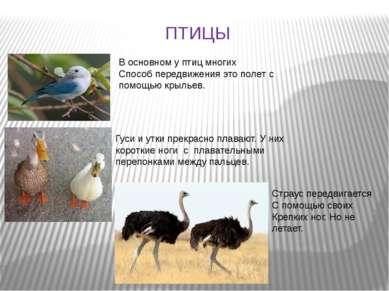 ПТИЦЫ В основном у птиц многих Способ передвижения это полет с помощью крылье...