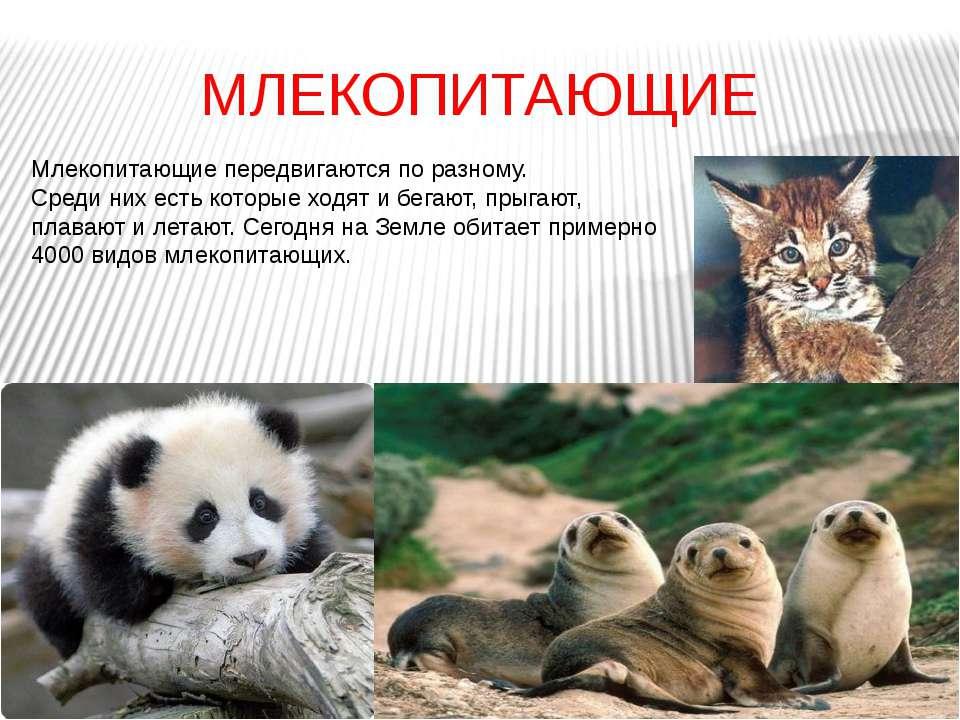 МЛЕКОПИТАЮЩИЕ Млекопитающие передвигаются по разному. Среди них есть которые ...