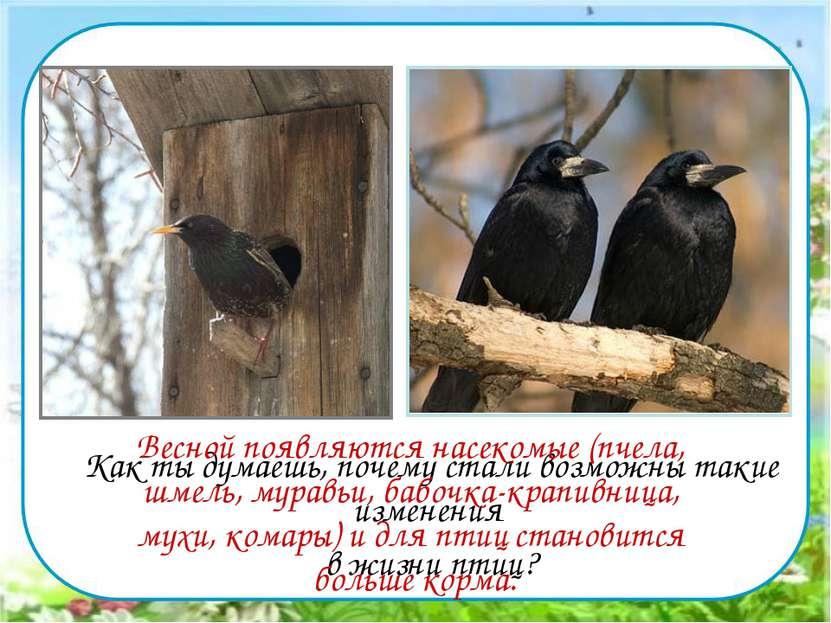 Как ты думаешь, почему стали возможны такие изменения в жизни птиц? Весной по...