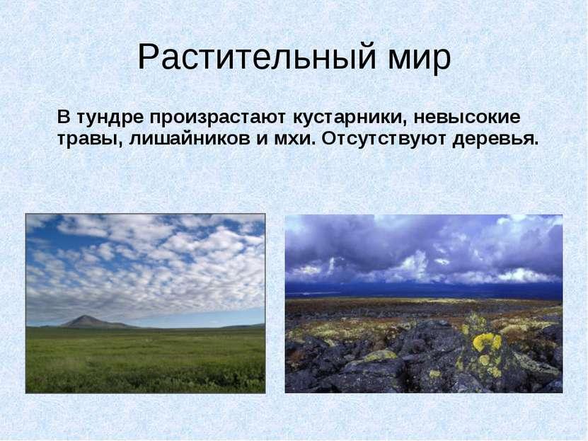 Растительный мир В тундре произрастают кустарники, невысокие травы, лишайнико...