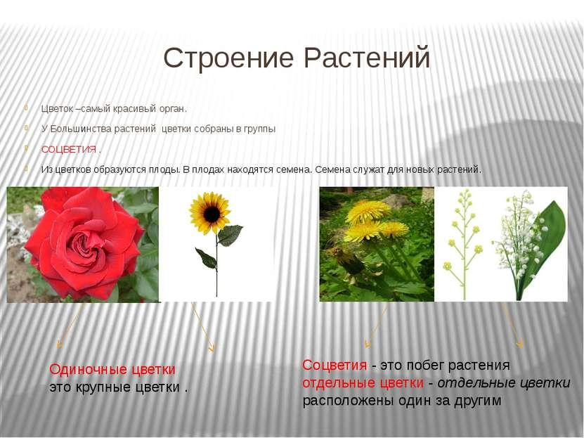 Строение Растений Цветок –самый красивый орган. У Большинства растений цветки...