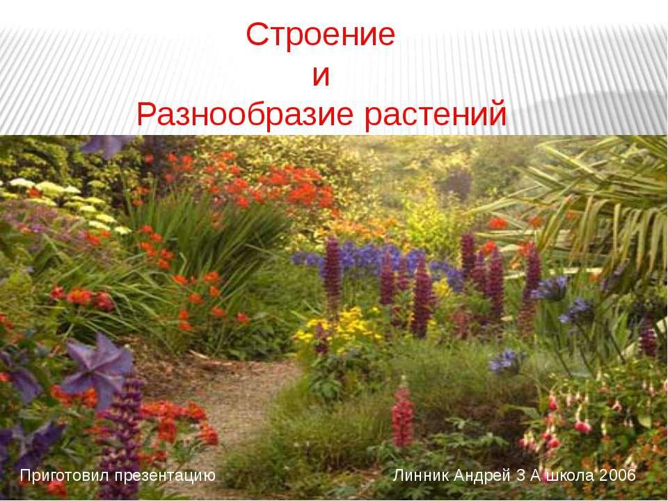 Строение и Разнообразие растений Приготовил презентацию Линник Андрей 3 А шко...