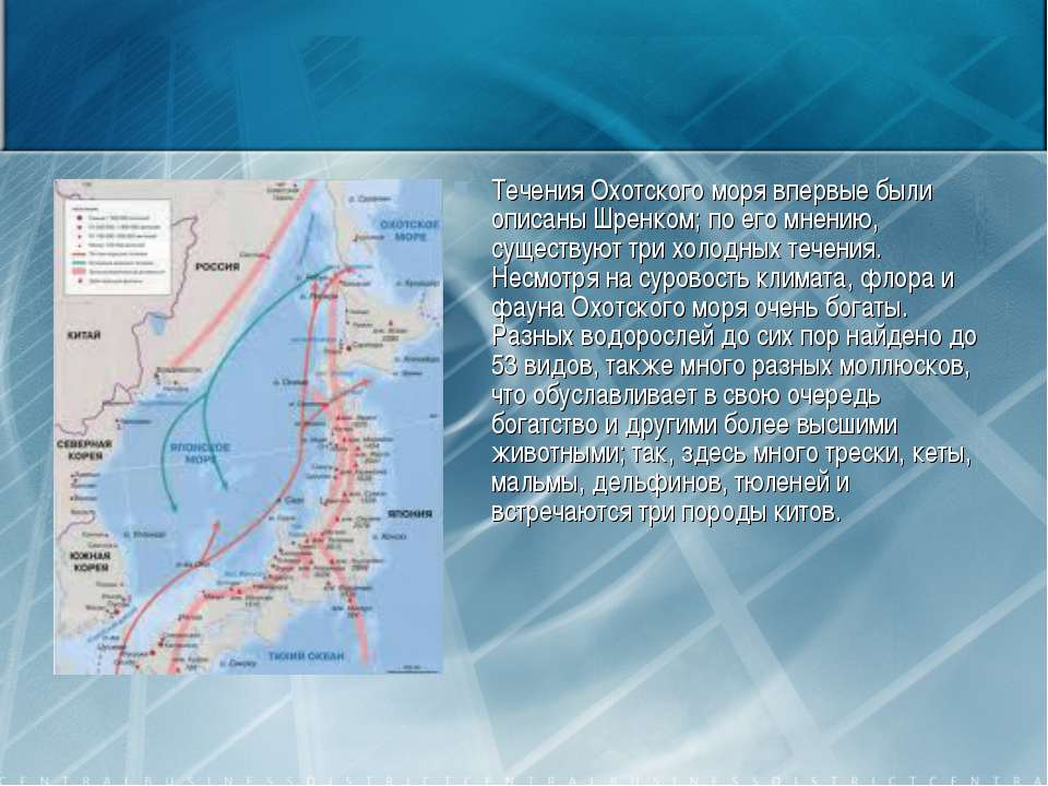 Течения Охотского моря впервые были описаны Шренком; по его мнению, существую...