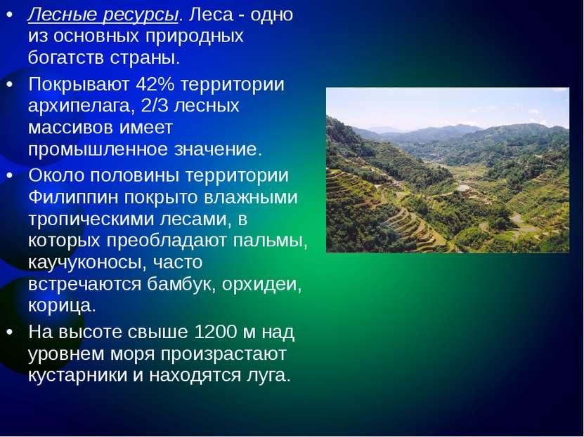 Лесные ресурсы. Леса - одно из основных природных богатств страны. Покрывают ...