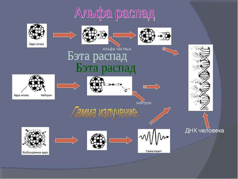 ДНК человека Альфа частица нейтрон