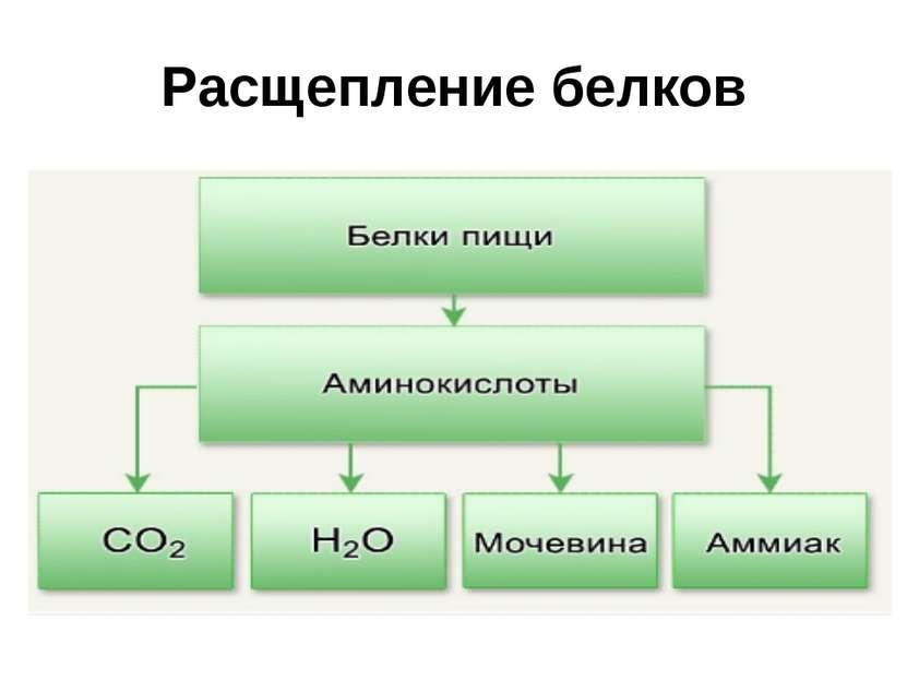 Расщепление белков