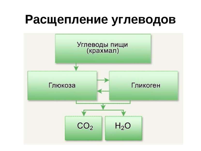 Расщепление углеводов