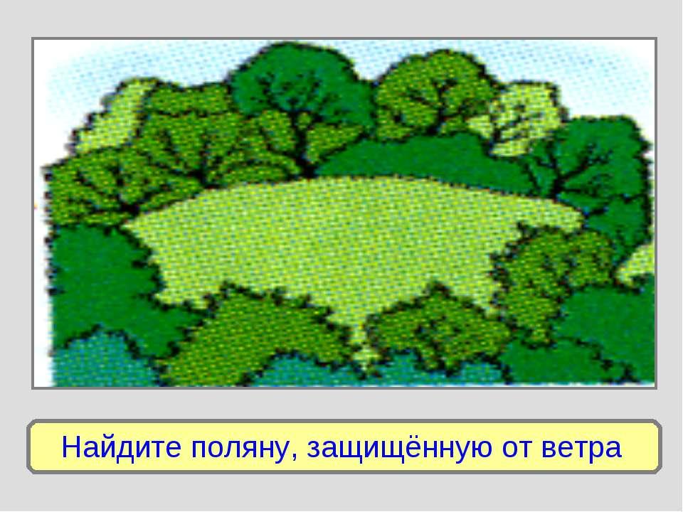 Найдите поляну, защищённую от ветра