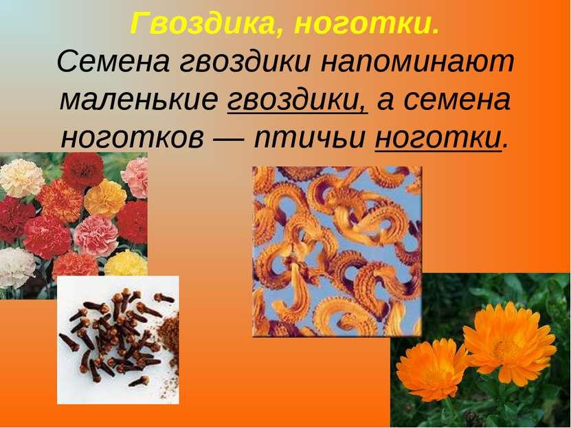 Гвоздика, ноготки. Семена гвоздики напоминают маленькие гвоздики, а семена но...