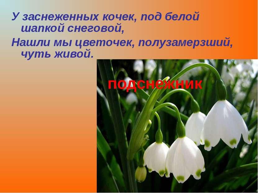 У заснеженных кочек, под белой шапкой снеговой, Нашли мы цветочек, полузамерз...