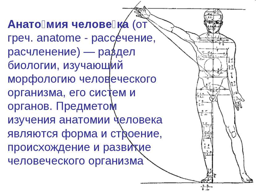 Анато мия челове ка (от греч. anatome - рассечение, расчленение)— раздел био...