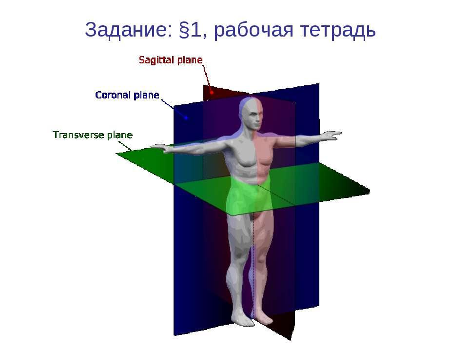Задание: §1, рабочая тетрадь