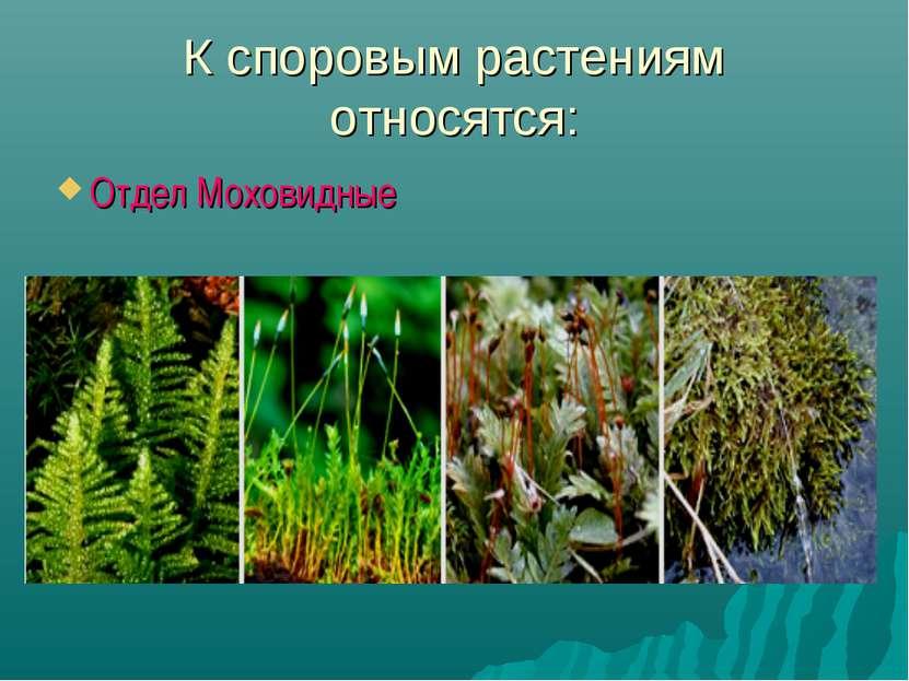 К споровым растениям относятся: Отдел Моховидные