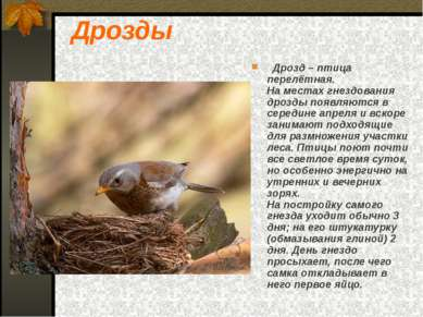 Дрозды Дрозд – птица перелётная. На местах гнездования дрозды появляются в се...