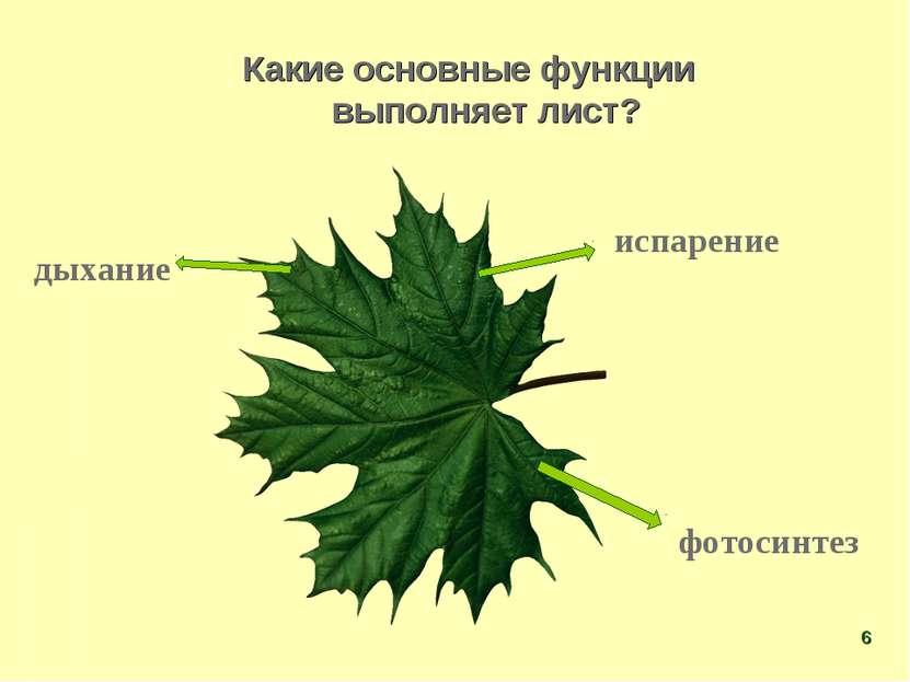 Какие основные функции выполняет лист? испарение фотосинтез дыхание *