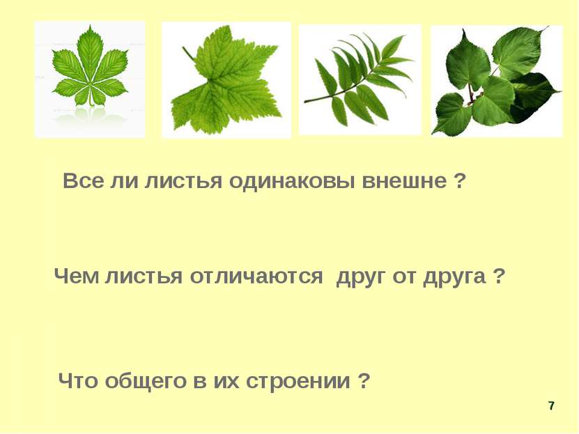 Все ли листья одинаковы внешне ? Чем листья отличаются друг от друга ? Что об...