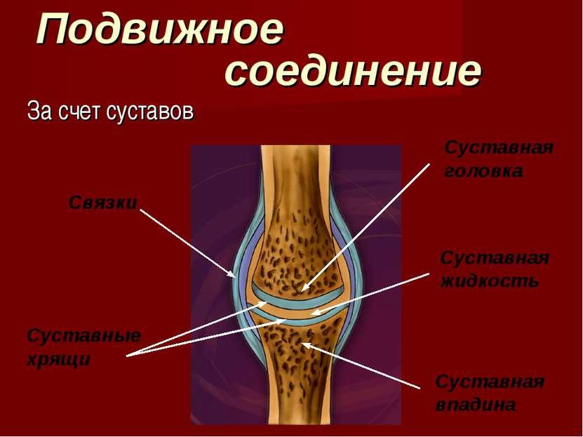 Подвижное соединение За счет суставов