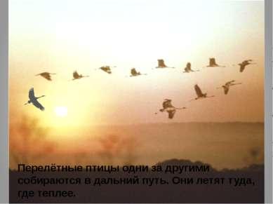 Перелётные птицы одни за другими собираются в дальний путь. Они летят туда, г...